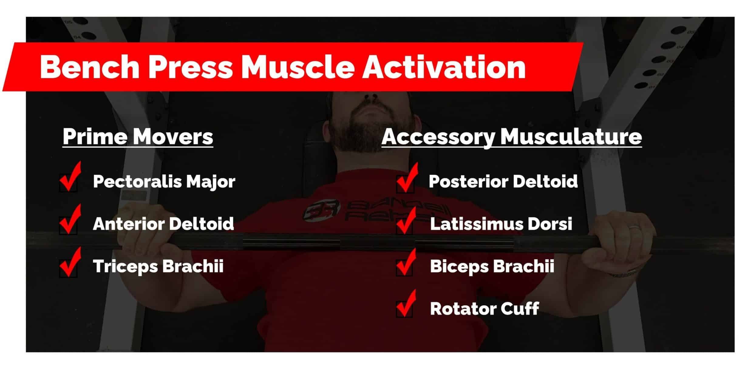 bench press muscle activation